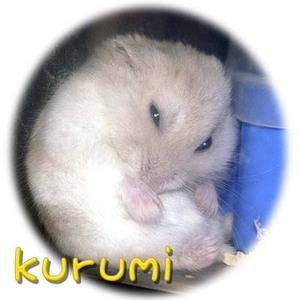 Kub038