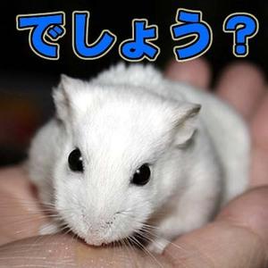 Shirohamu