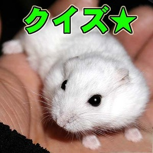 Shirohamu1