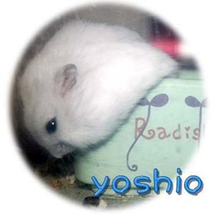 Yb049